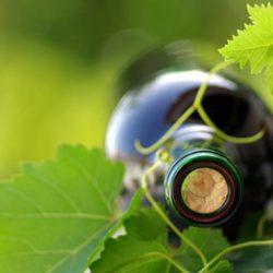 winemaking_1777274_thumb
